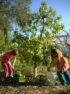 Eliza and Mahayla Fertilizing Avocado